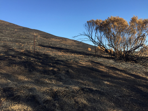 Burned hills of Merrill Fire 2