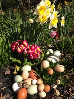Easter Eggs-primrose 2