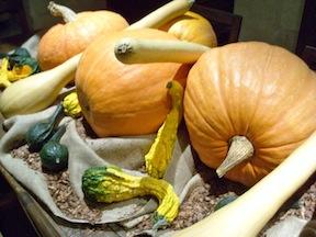 pumpkins-gourds 2